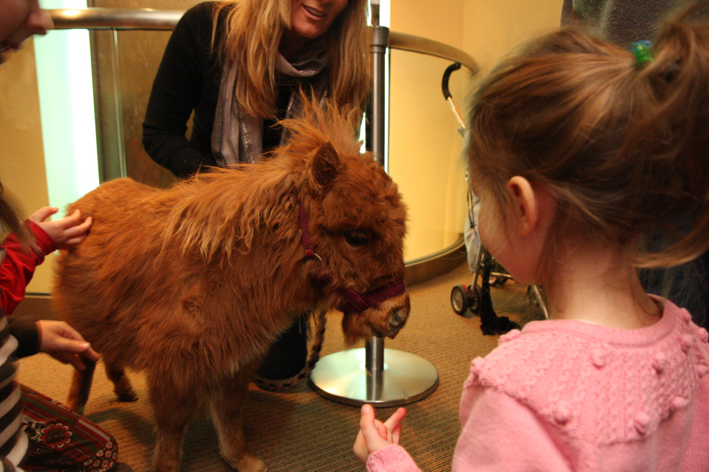 Miniature Horses as Therapy Animals